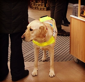 Royal Yacht Britannia, Assistance Dogs and Lothian Buses