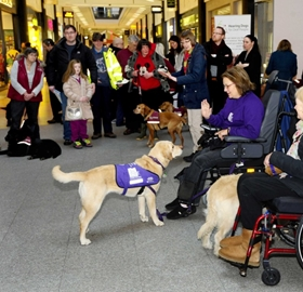 Dogs of #AccessDay!